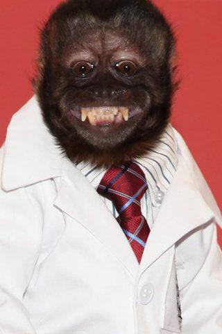 Crystal the Monkey 1